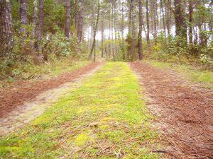 Pista forestal circulable en la Ruta circular de Contis Plage