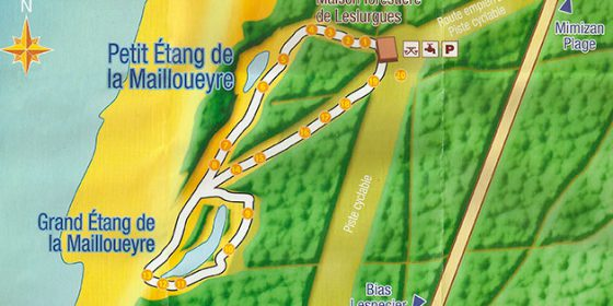 MIMIZAN. Paseo por la reserva biológica de La Mailloueyre
