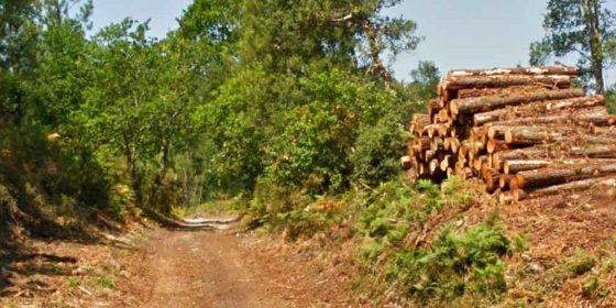 """SEIGNOSSE. La ruta azul de los """"Tucs"""" (7,9 km)"""