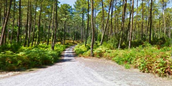 SOUSTONS. Routes to discover the forest (5,4 km and 9,8 km)